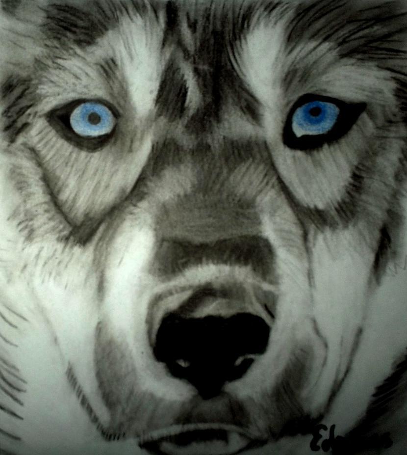 Husky Autors: Edgarsnr1 Oriģināli zīmējumi