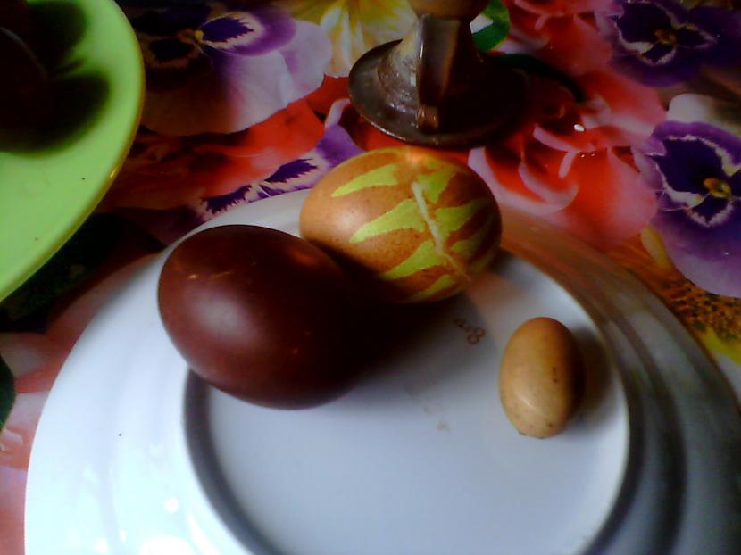 """Salīdzinājumā ar lielajām olām... Autors: Fosilija """"Lielā"""" ola"""