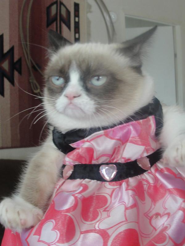 Kā patiesībā sauc Grampy Cat... Autors: Sandra Bl 4.aprīļa jubilārs!
