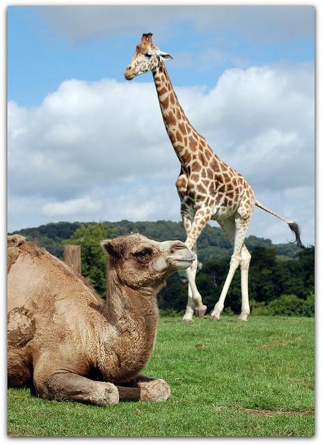 Žirafes var izdzīvot ilgāk bez... Autors: Fosilija Daži interesanti fakti