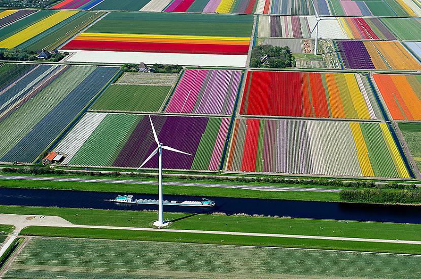Tulpju lauki Nīderlandē Autors: Šamaniss Kā izskatītos pasaule ja tu būtu putns.