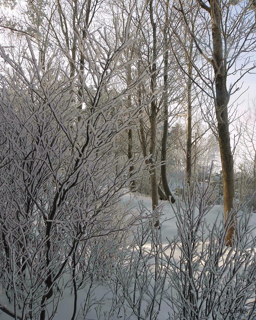 Autors: lucifers Pagāšgada ziema 2