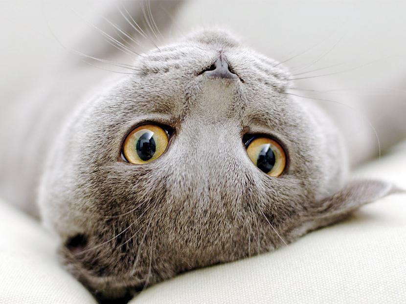 Vēl viena kaķu apbrīnojama... Autors: Raziels Par ko kaķi zina, bet nerunā