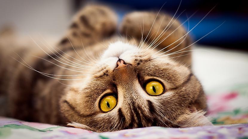Anglijas iedzīvotāji II... Autors: Raziels Par ko kaķi zina, bet nerunā