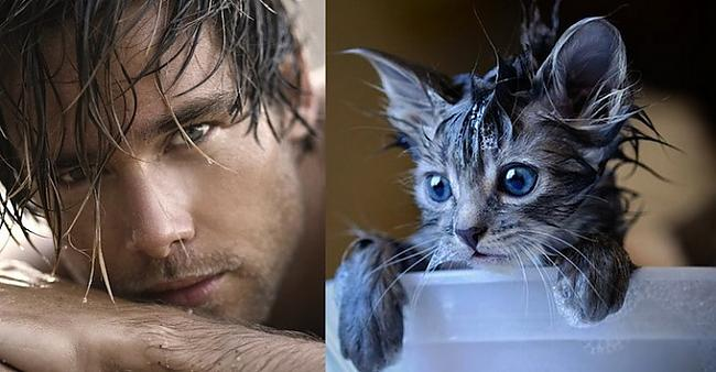 Autors: Spocīgā Divas jaukas būtnes - kaķi un vīrieši.