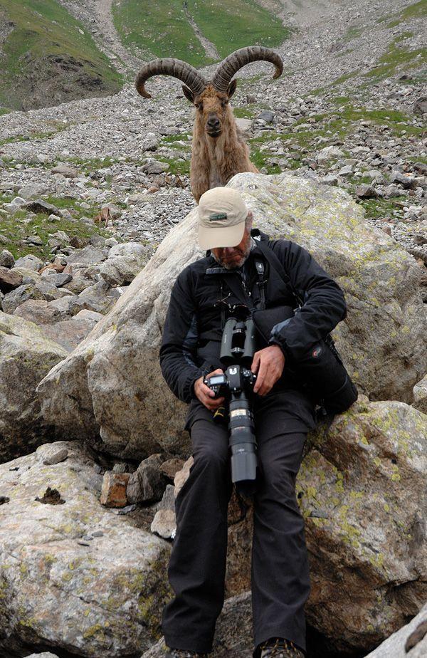 Eu vecais parādi man arī... Autors: Raacens Labākās dzīvnieku fotobombas!