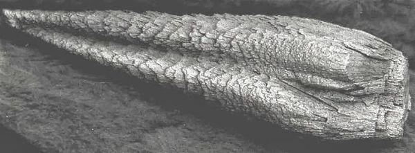 Objekts ko atrada Bobs Vaits... Autors: Moonwalker 15 neizskaidrojamas parādības