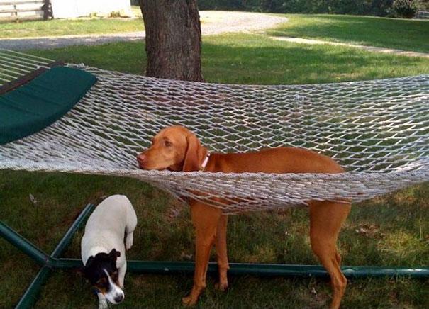 Autors: norle2001 Mēbeles pret mājdzīvniekiem
