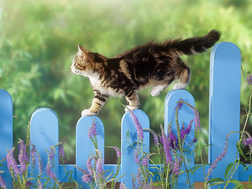 Autors: burtutarps Kaķi