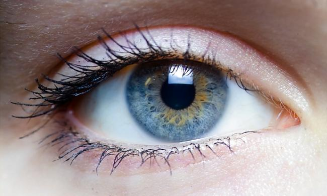 Tīklene ir acs ābola... Autors: Prāta Darbnīca Atrodi savu aklo plankumu!