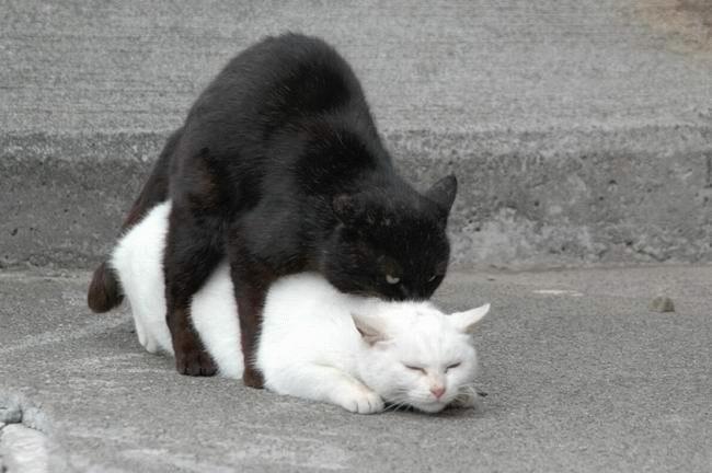 Oooo jāaaaa jūs sniedzat man... Autors: Fosilija Kaķu stāsti