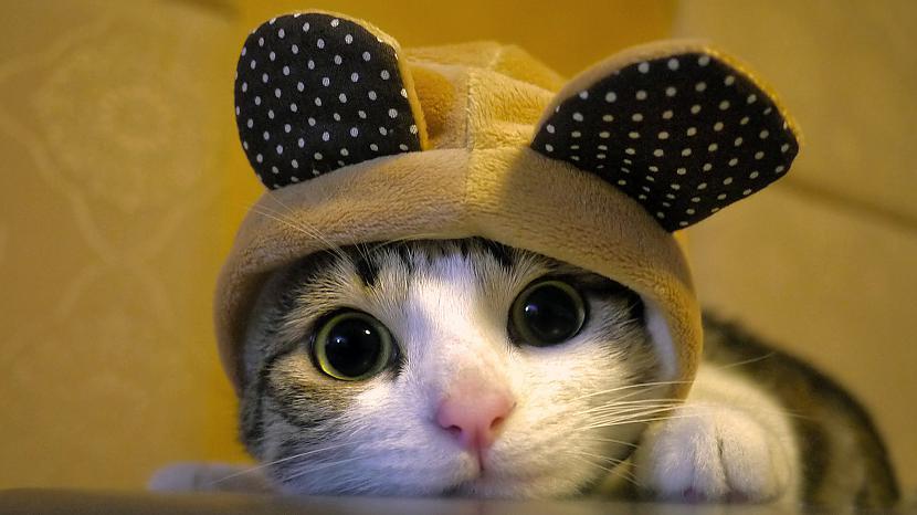 10 bdquoEs nemaz neesmu tik... Autors: kasītis no simpsoniem D Lietas, ko kaķi par sevi tev neatklās
