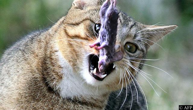 6 bdquoKaķu barība ir tikai... Autors: kasītis no simpsoniem D Lietas, ko kaķi par sevi tev neatklās
