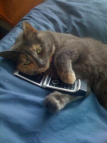 Autors: A3A3 Ja kaķi mācētu sūtīt SMS