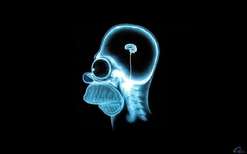 Produkti priekscaron smadzenēm... Autors: A3A3 30 paši bagātākie produkti priekš ķermeņa