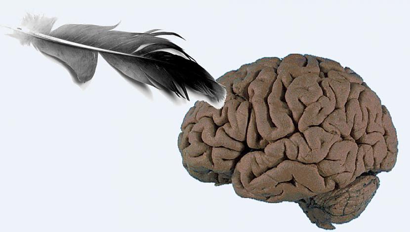 Pamēģini sevi pakutināt ndash... Autors: Aurelius Kā rodas «bezfilma» un citi fakti par smadzenēm