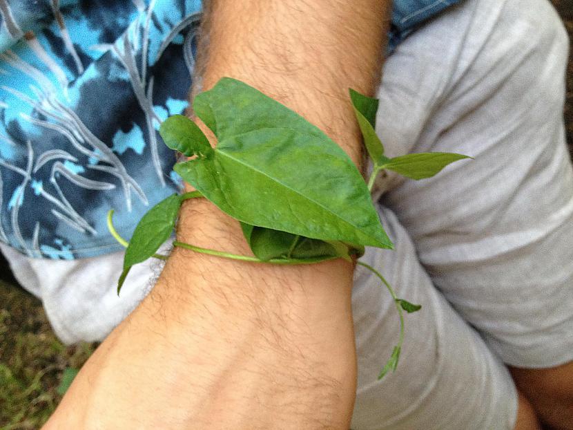 Zaļumu aproce  Autors: Sveiksunvesels Zaļa aproce - BRĪVĪBAS simbols tiem, kuri nesmēķē!