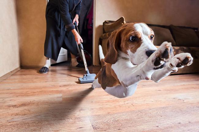 Suņiem var mācīt jaunus trikus... Autors: Fosilija Lietas ,kuras tev ir jāzin par kaķi un suni.
