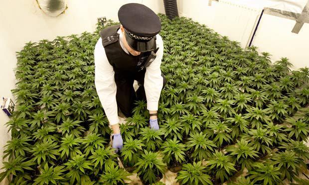 Marihuānu nav iespējams... Autors: BARAKA OBAMAKA Fakti par marihuānas lietošanu, 100% Patiesi