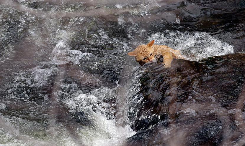 Kaķis mēģina uzrāpties uz... Autors: BodyBoard Attēli / Teksti - Dabas Pasaule