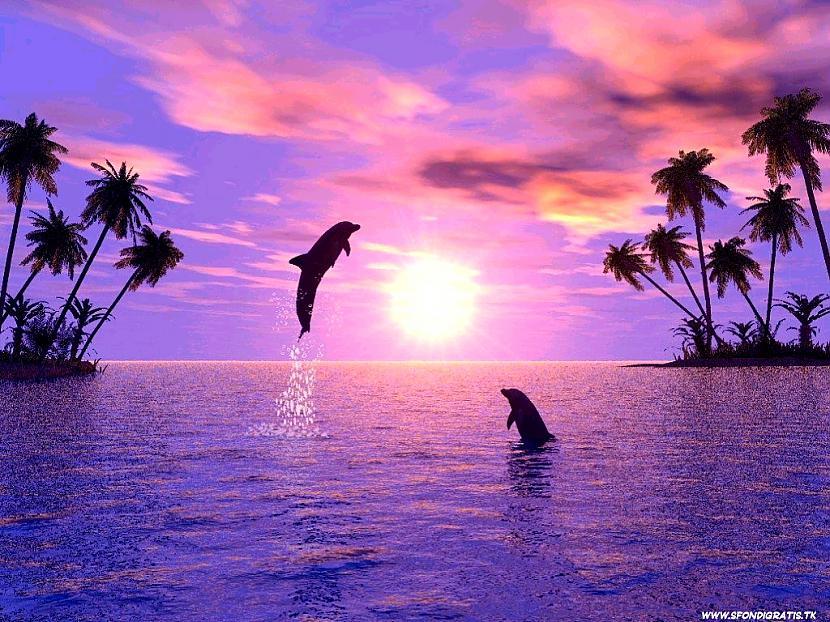 nbsp10 Delfīni elpo ar... Autors: kitucis123 Delfīni #Fakti . ♥