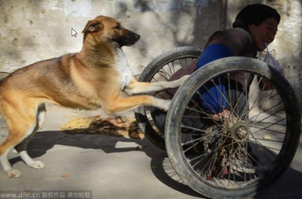 Pateicoties jaunajiem papildus... Autors: kaķūns Lielā Dzeltenā - suns ar lielu sirdi