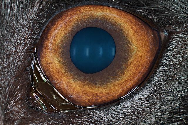 Suņa acs Autors: Tourist Unikālās acis