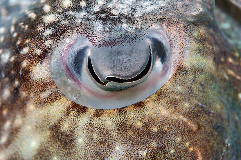 zivs acs Autors: Tourist Unikālās acis