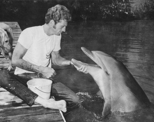 Delfīns Ketija 60to gadu... Autors: kaķūns Bēdīgas dzīvnieku dzīves lietas