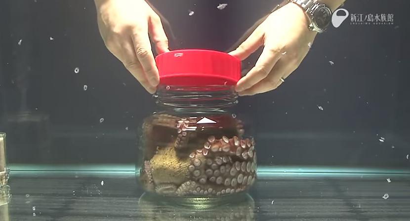 Autors: Fosilija Kas notiek ar astoņkāji, kad viņu ieliek parastā mazā burciņā?
