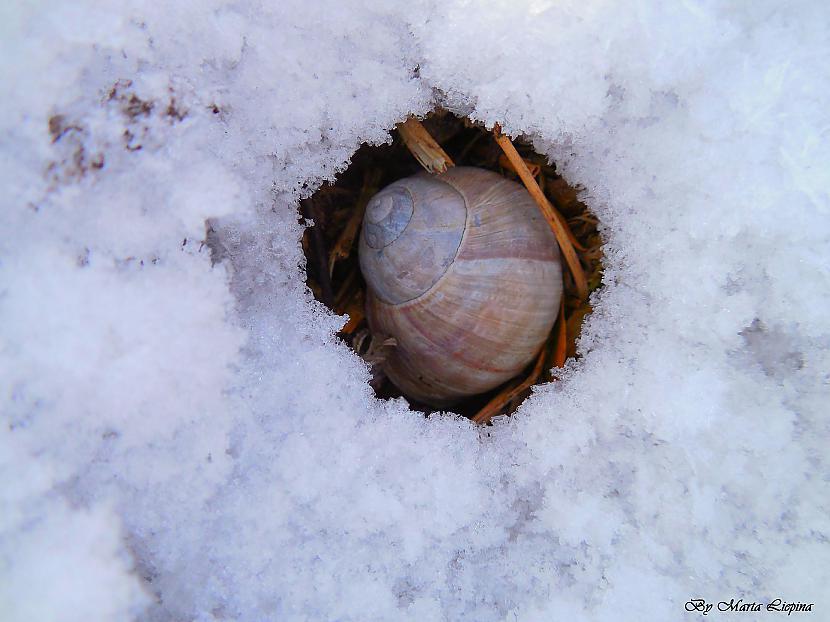 pamestie apartamenti Autors: saule70 skaidrā ziemas dienā :)