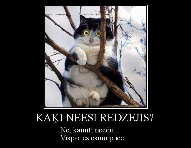 Autors: Kolch Kaķi neesi redzējis?