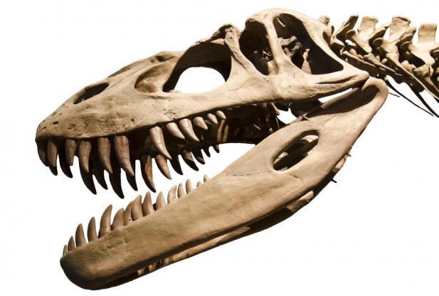 Dinozauru galvaskausiem bija... Autors: Kapteinis Cerība Fakti par Dinozauriem 1. daļa.