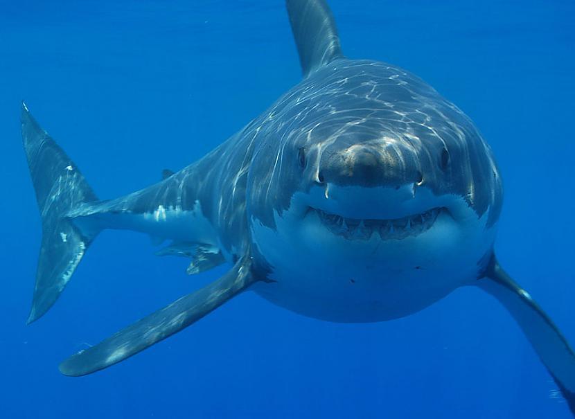 Haizivis nogalina 12 cilvēku... Autors: PartyFreak2013 20 Aizraujoši fakti Jums!