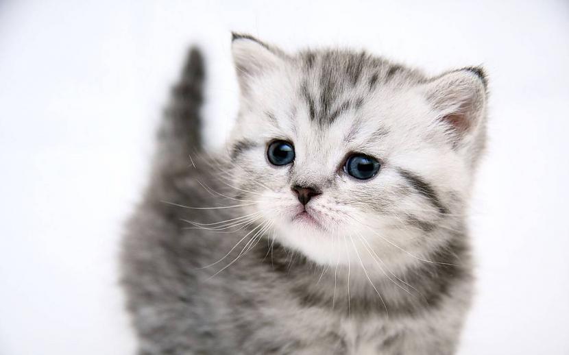 Autors: QIUBIHERO Cute cats