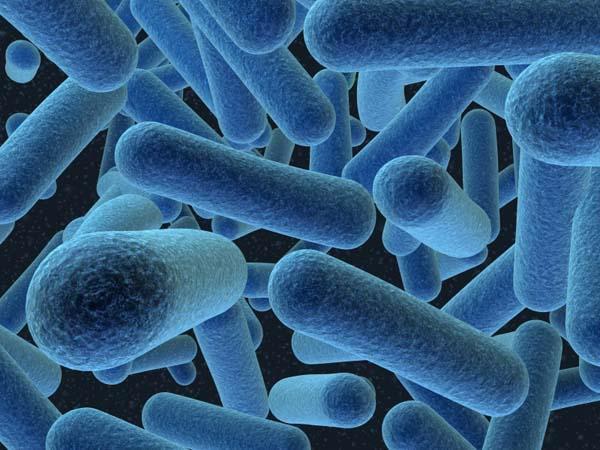 Baktēriju svars kas dzīvo tavā... Autors: LVspoks Interesanti fakti par cilvēku