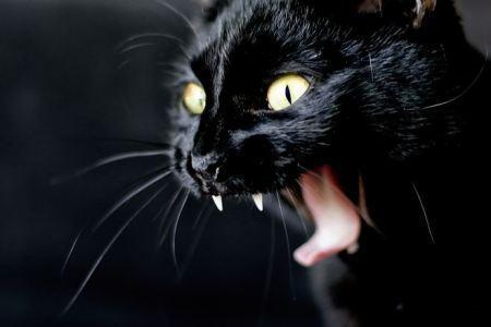 5melni kaķi nes nelaimiMeli... Autors: Artastic 5 nepatiesi mīti