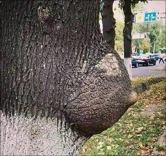 Autors: Kolch Es te tā, garāmejot koku nofočēju...