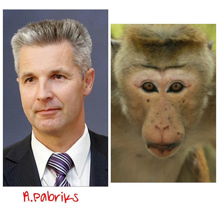 Artis Pabriks  bijušais... Autors: ghost07 Latvijas politiķi vs pērtiķi (Līdzības)