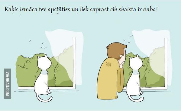 Autors: minkans8 10 labumi no tā , ka tev ir kaķis!