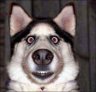 Autors: Traxes Interesants video par suņiem.