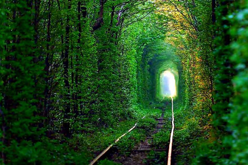 Mīlestības tunelis... Autors: im mad cuz u bad Elpu aizraujošas vietas uz Zemes