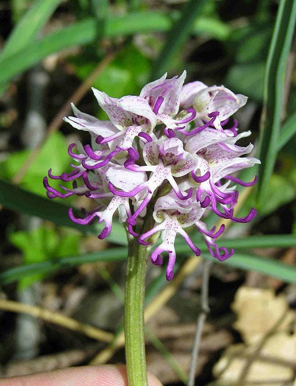 Autors: Prāta Darbnīca Ziedu ilūzijas - augi, kas izliekas