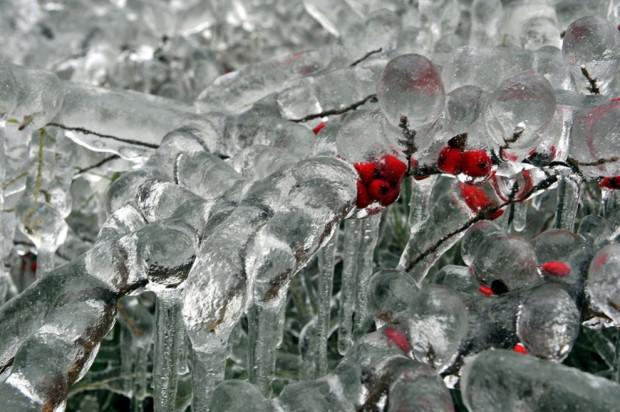 Visas ogas ir sasaluscaronas Autors: mezatrollis Auksti ir ne tikai Sibīrijā, bet arī Eiropā