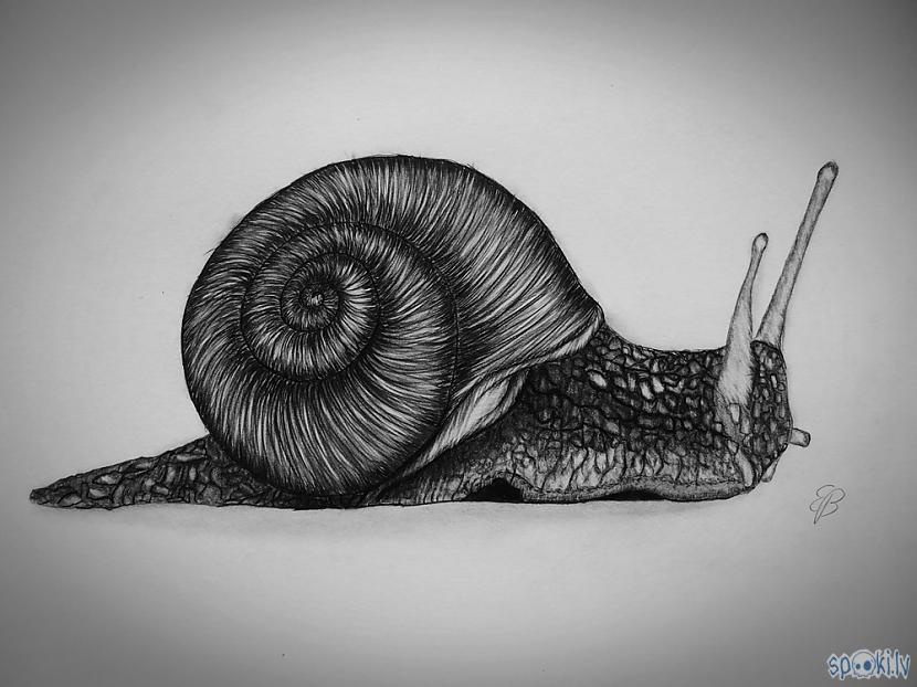 Autors: Edgarsnr1 Kā uzzīmēt gliemezi!