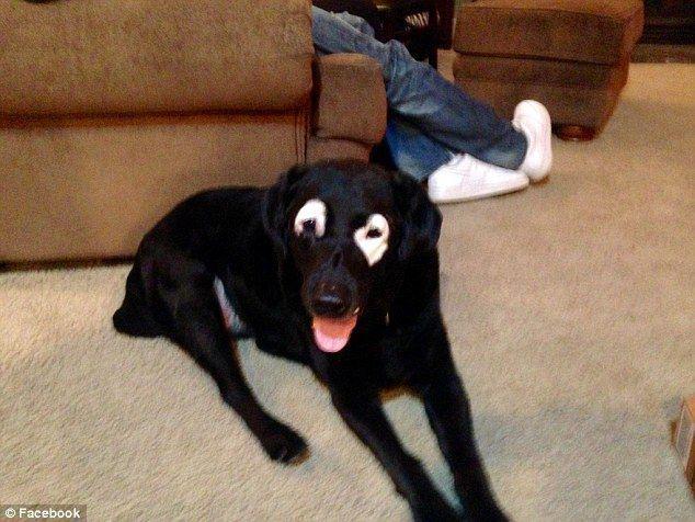 ldquoMūsu pilsētā viņscaron ir... Autors: zeminem Pandusuns: suns ar retu ādas slimību, kas liek līdzināties pandai.
