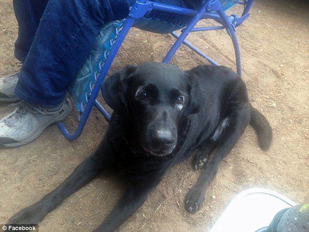 Autors: zeminem Pandusuns: suns ar retu ādas slimību, kas liek līdzināties pandai.