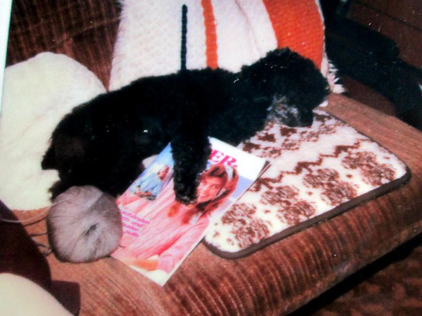 Adu jau Līzelotei svīteri Suns... Autors: rasiks Lietuvas latvieši (82)