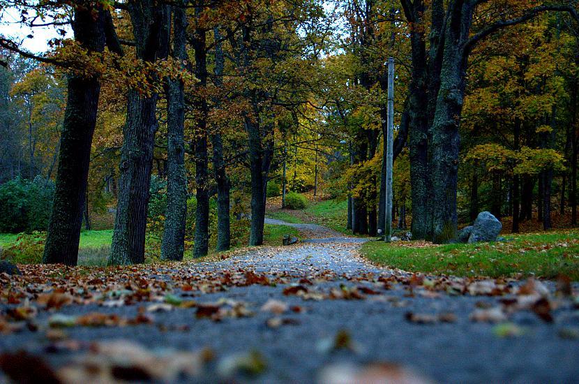 Vēl nedaudz kaut kas no rudens Autors: Everbergerdīne Manas fotogrāfijas 3