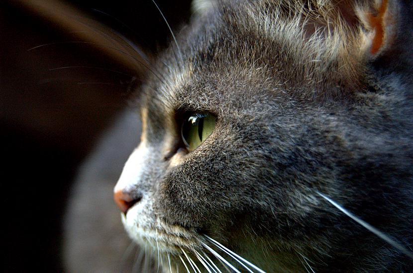 Kā jau parasti arī mans kaķis... Autors: Everbergerdīne Manas fotogrāfijas 3